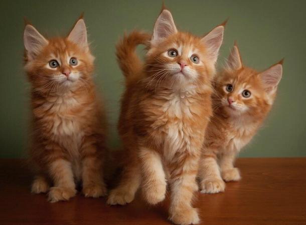 День рождения наших кошек!